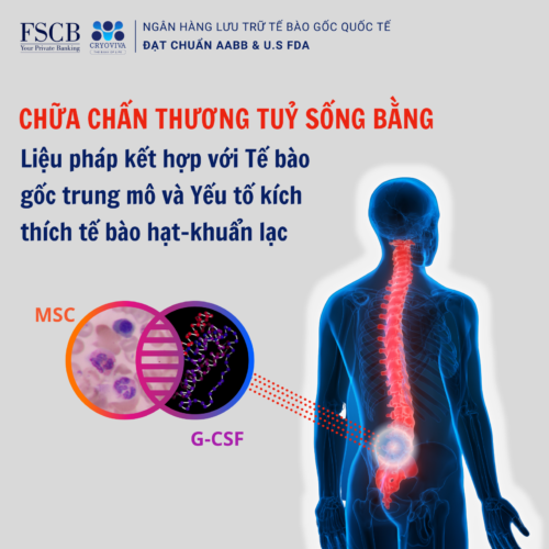 Chữa chấn thương tuỷ sống bằng tế bào gốc trung mô