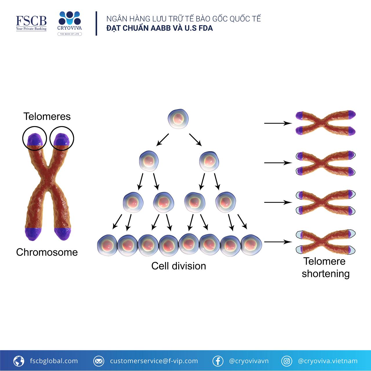 tế bào gốc trung mô