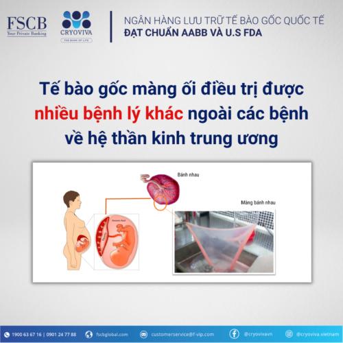 tế bào gốc màng ối
